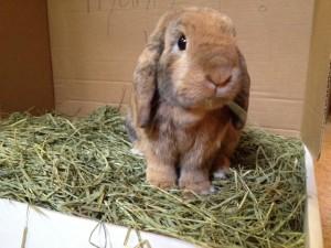 Bunny_Hay