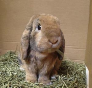 Bunny_Hay_crop